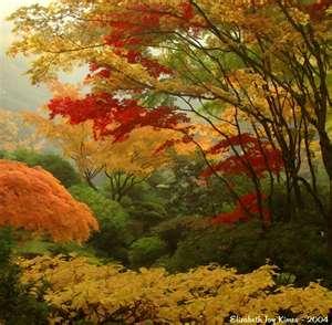infonoworgGardenTips Tips for gardeners about indoor and